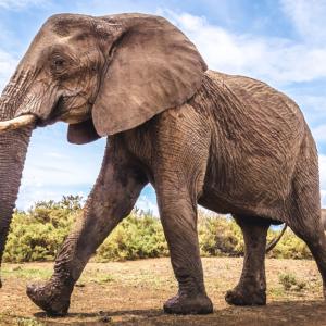 Krelíme rukama: Slon